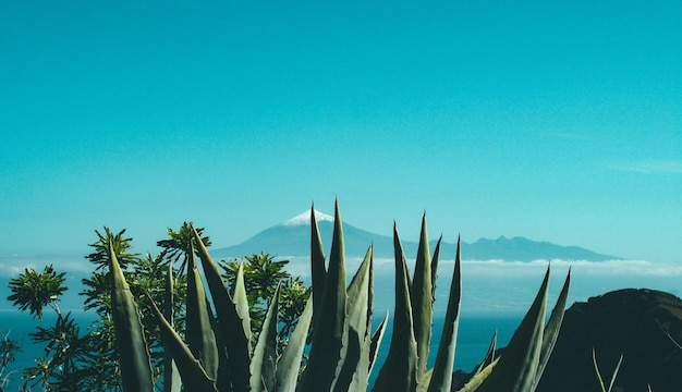 Cactus and plants on a cliff near a rock and a mountain with snowy top in the distance Free Photo