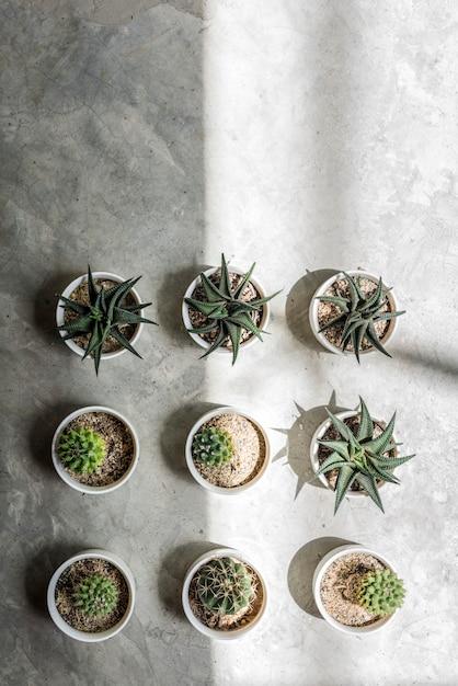 Cactus pot home plants concept Free Photo