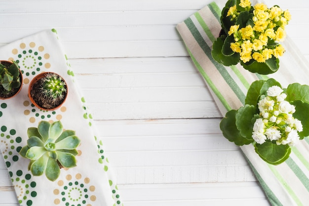 Cactus and potted succulent plant on the white table Premium Photo