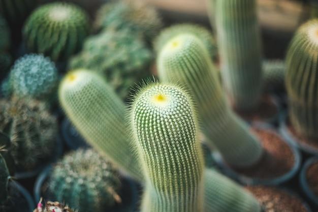 Cactus tree closeup Premium Photo