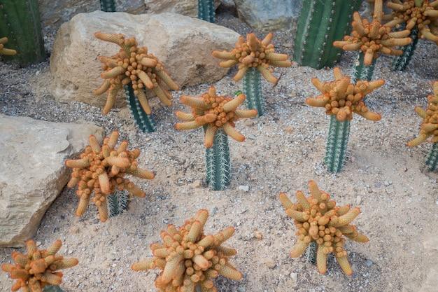 Cactus tree Premium Photo