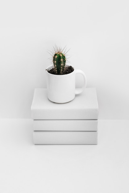 Cactus in white mug over the stacked of books isolated on white background Free Photo