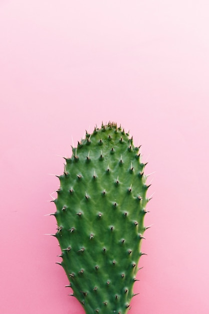 Cactus with many thorns on colored background Free Photo