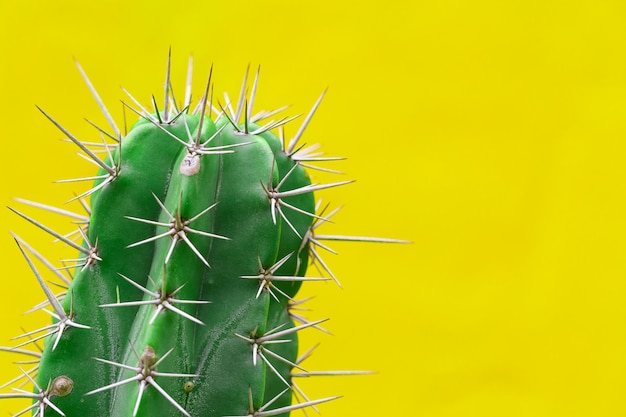 Cactus with sharp thorns Premium Photo