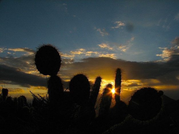 Of cactuses and a beautiful sunset Free Photo