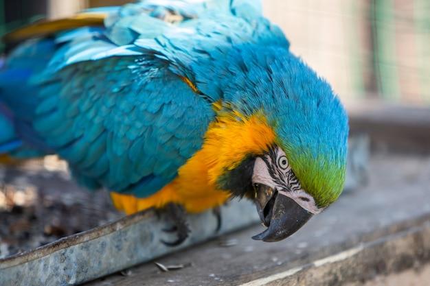 動物園のcageの中のカラフルなオウム。 Premium写真