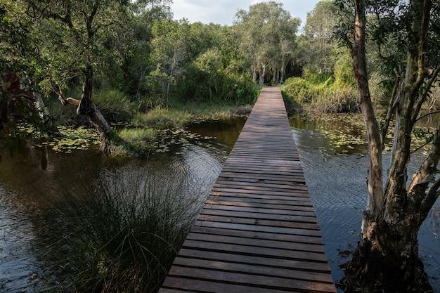 タイ、ラヨーン植物園のcajuput林を通る道 Premium写真