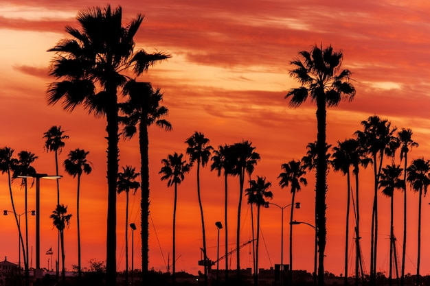 California sanset scenery Free Photo