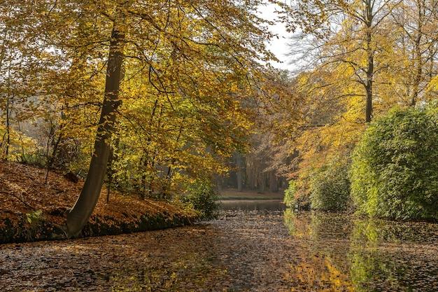 木々や草でいっぱいの土地に囲まれた湖の落ち着いた景色 無料写真