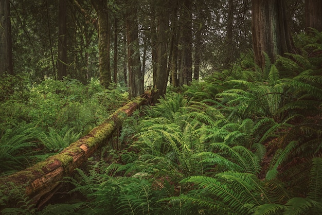 Calming in the woods Free Photo