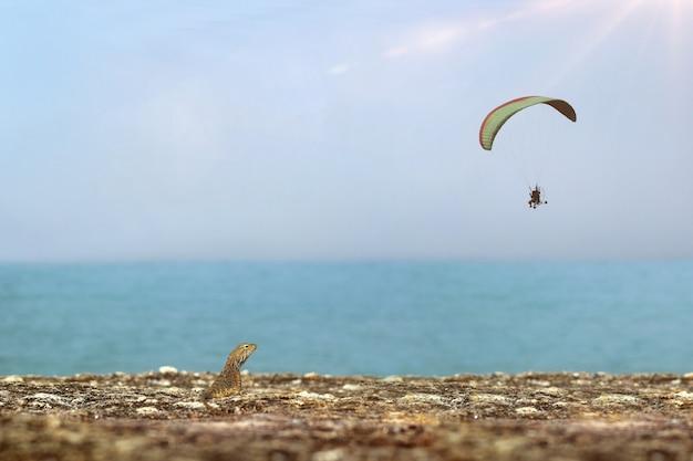 Calotes лишай и парамотор на побережье. Premium Фотографии