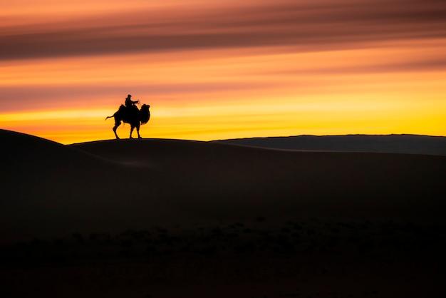 Camel going through the sand dunes on sunrise, gobi desert mongolia. Premium Photo