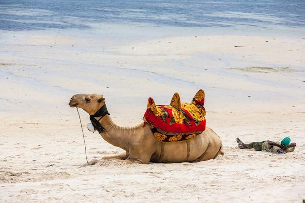 Верблюд лежит на песке на фоне океана и лодок Бесплатные Фотографии