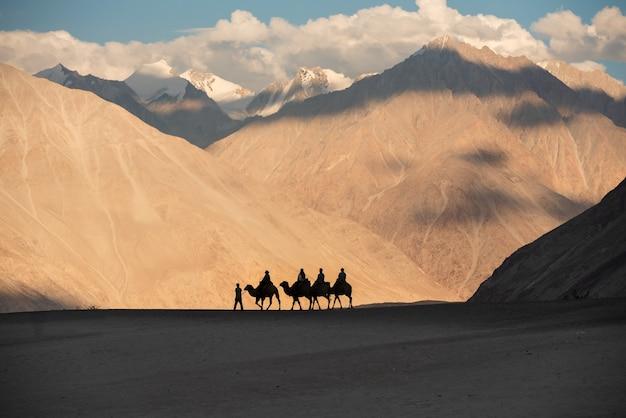 Верблюд отправляется в долину нубра в лех-ладахе, джамму и кашмир, индия. Premium Фотографии