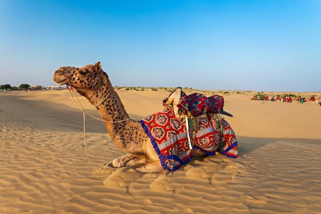 Camels in desert Premium Photo