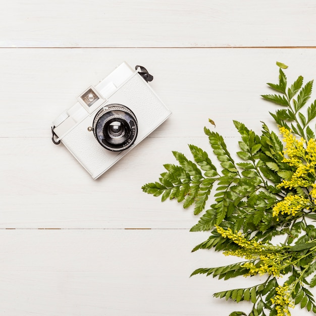 Camera and yellow flowers with green leaves Free Photo