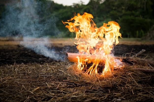 Кемпинг на земле с использованием бамбука и соломы в качестве топлива. Premium Фотографии
