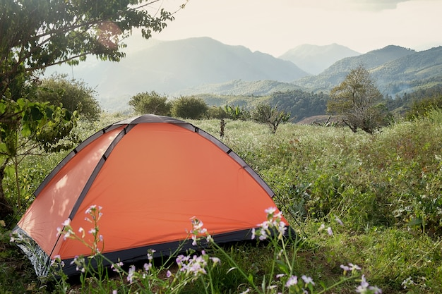 Camping in a forest. morning scene with tourist tent in green forest near of the lake. outdoor lifestyle.selective focus. Premium Photo