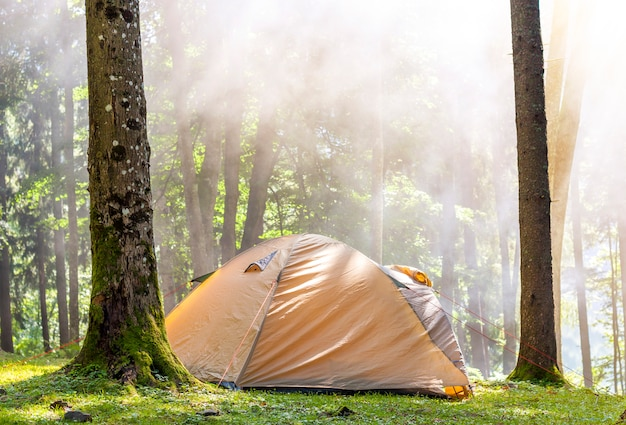 Camping tent in green forest in spring sunny morning with fog haze among trees. recreation concept. soft light effect Premium Photo
