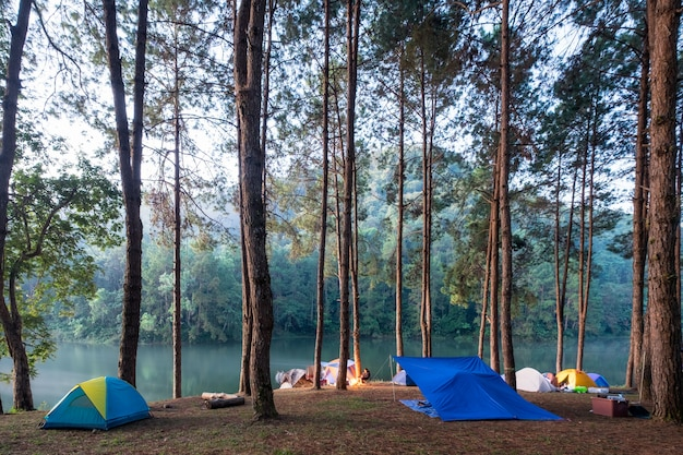 Camping tent in pine forest on reservoir in evening Premium Photo