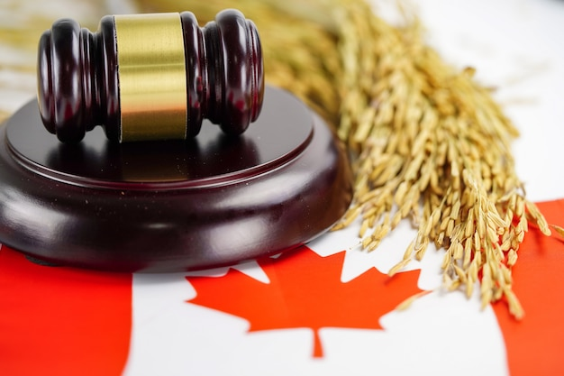Canada flag and judge hammer with gold grain from agriculture farm. Premium Photo