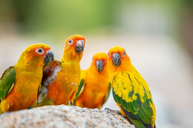Canine parrot and cute bird Premium Photo