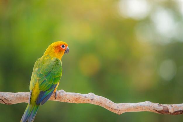 Canine parrot and cute bird Premium Photo
