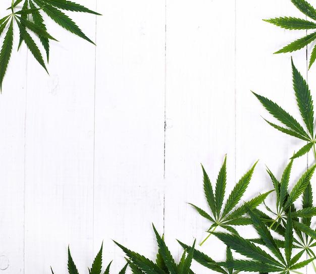 大麻葉植物の背景 無料写真
