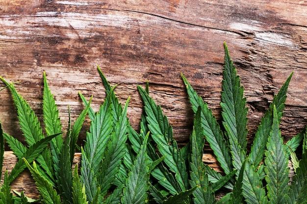 Pianta a foglia di cannabis Foto Gratuite