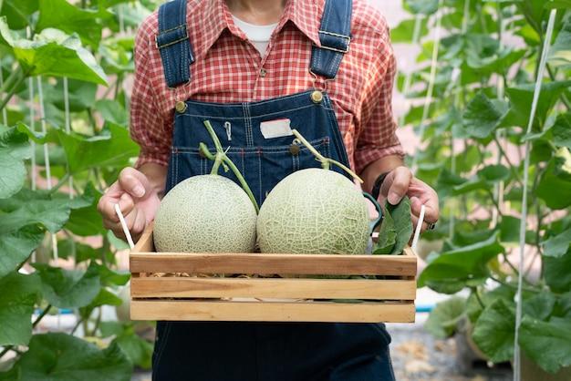 温室で育つメロンのメロンは、メロンの網で支えられています。 Premium写真