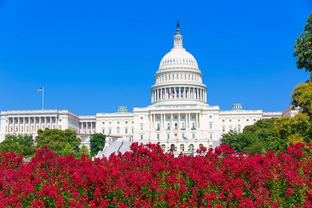 Capitol building washington dc pink flowers usa Premium Photo