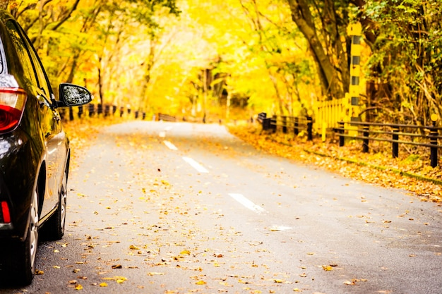 Car on the road in autumn forest Free Photo