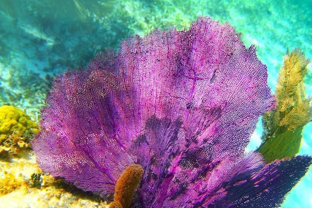 Caribbean coral reef mayan riviera colorful Premium Photo