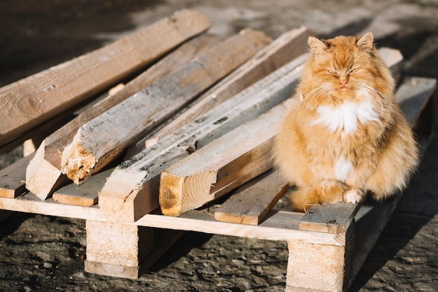 Carpentry concept with cat Free Photo