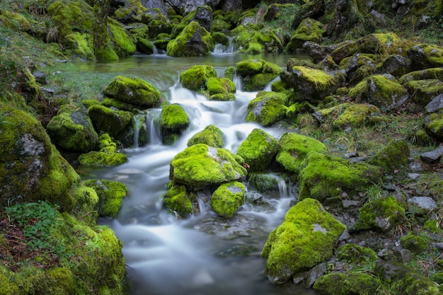 Cascade falls over mossy rocks Premium Photo
