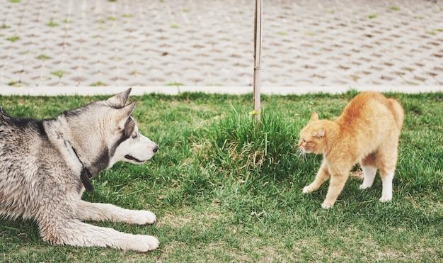 Кошка против собаки, неожиданная встреча на свежем воздухе Бесплатные Фотографии