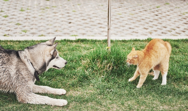Cat against a dog, an unexpected meeting in the open air Free Photo
