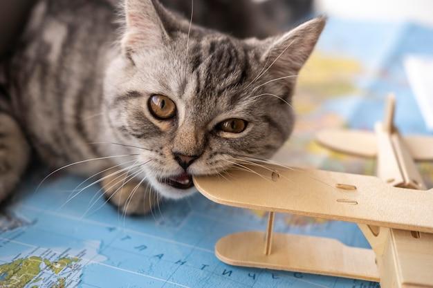 おもちゃを噛んで地図に座っている猫 Premium写真