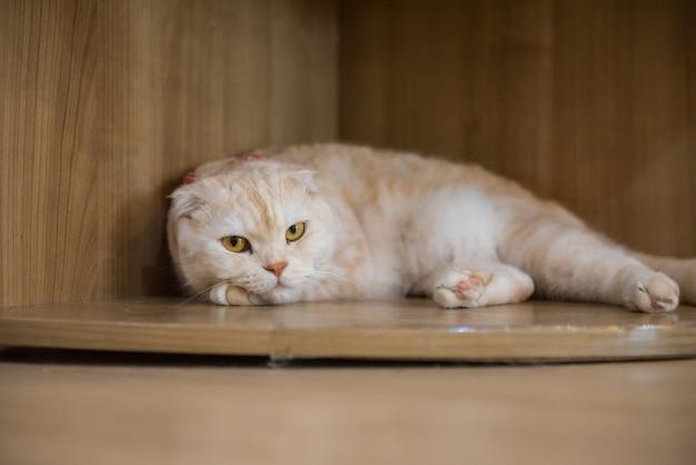 Cat in the cafe Premium Photo