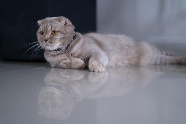 猫かわいい猫私の家のソファで寝ている猫完璧な夢 Premium写真