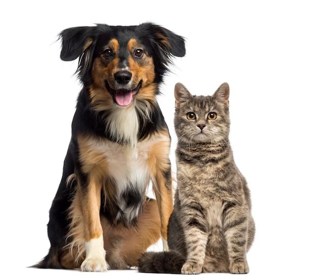 Cat and dog sitting together Premium Photo