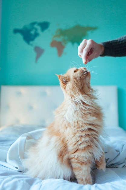 Cat eating healthy diet at home Premium Photo