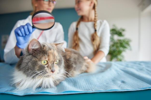 虫眼鏡による猫の検査 無料写真