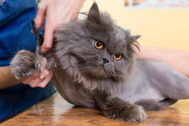 Premium Photo | Cat grooming in pet beauty salon.