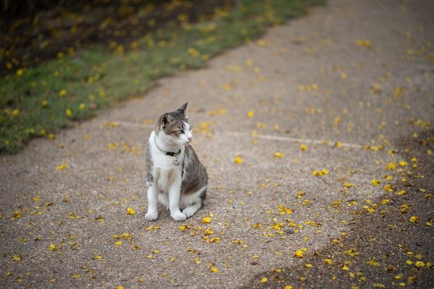 A cat is sitting in the garden. he is so cute. he looks like a little tiger. it is popular pet. Premium Photo