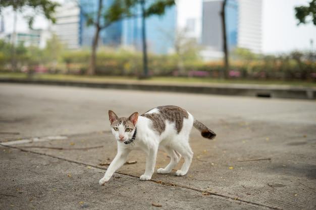 A cat is walking in the garden. he is so cute. he looks like a little tiger. it is popular pet. Premium Photo