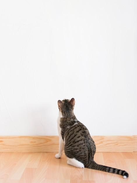 Cat looking at wall Free Photo