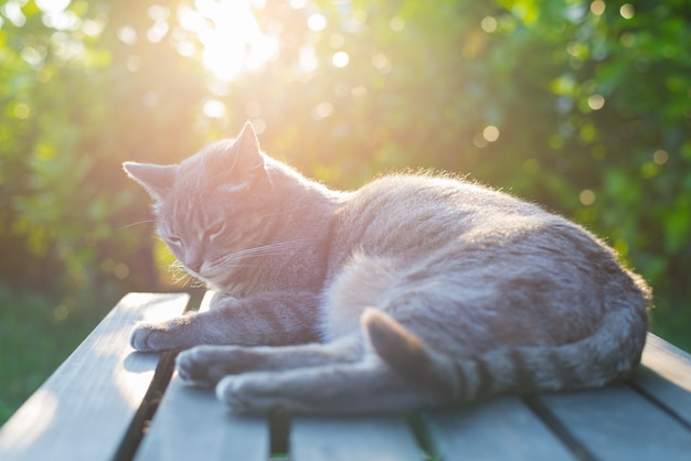 Cat lying on bench Premium Photo