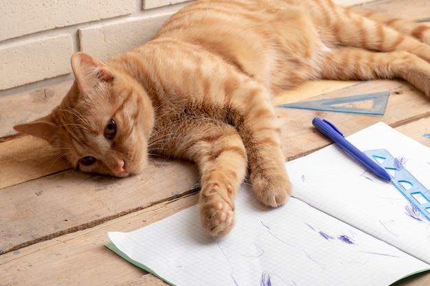 Cat lying on wooden table near homework inside Premium Photo