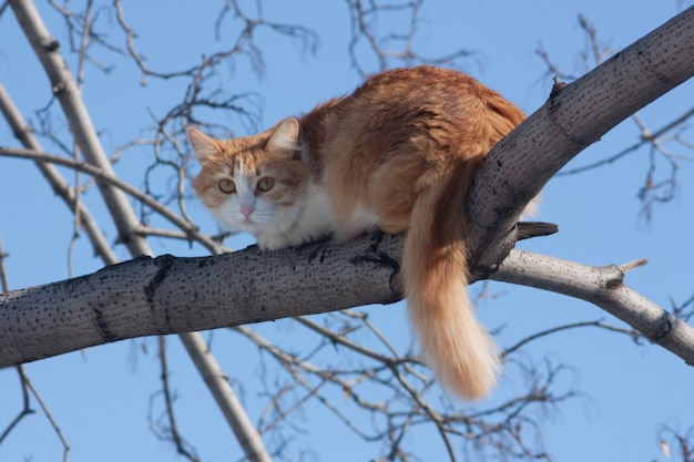 cat on a tree photo free download. Black Bedroom Furniture Sets. Home Design Ideas